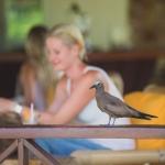 bird-island-lodge-seychelles-wanderlust-resort-photograper