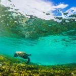 green-sea-turtle-bird-island-seychelles-wanderlust-underwater-photograper-02