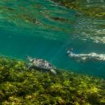 snorkeling-turtle-bird-island-seychelles-wanderlust-underwater-photograper