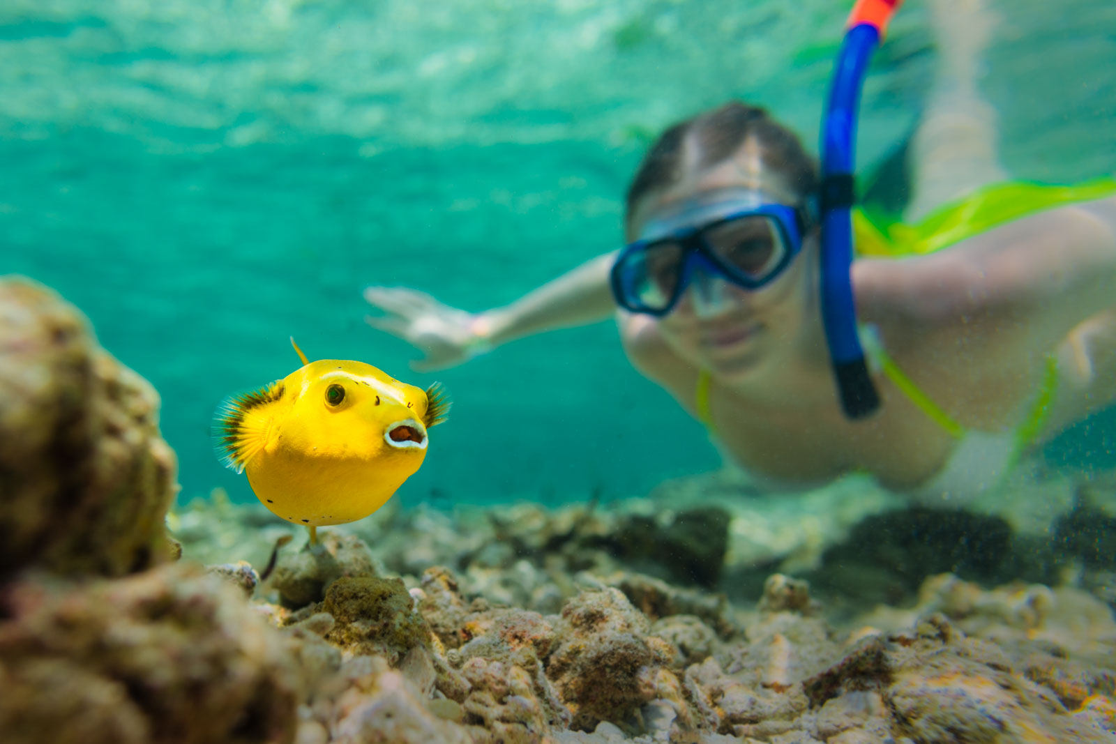 snorkeling-yellow-puffer-fish-bird-island-seychelles-wanderlust-underwater-photograper
