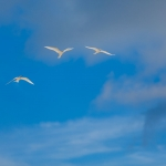 white-terns-bird-island-seychelles-wanderlust-nature-photograper