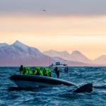 Humpback whale safari in Andenes, northern Norway