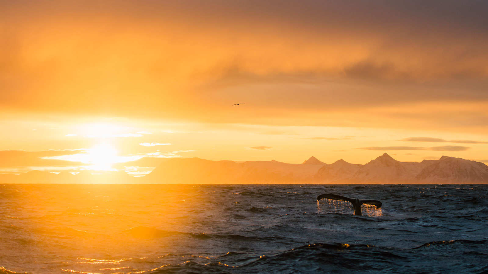 Humpback whale safari in Andenes, northern Norway