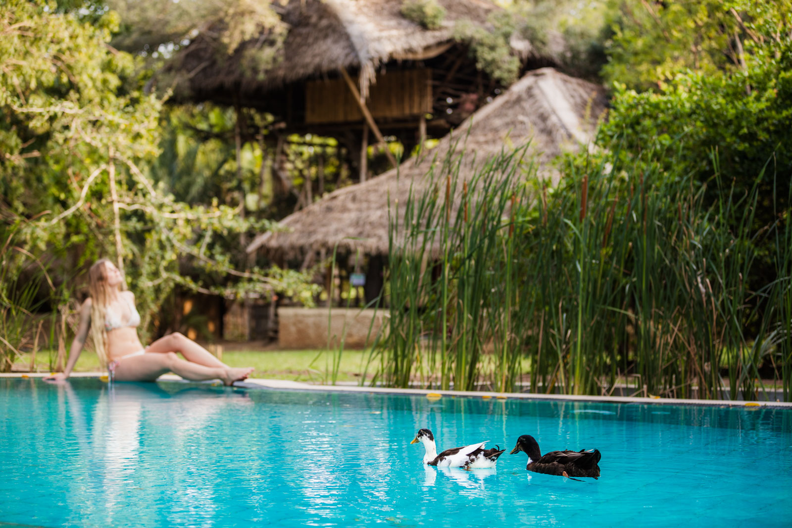 ducks-pool-eco-lodge-saraii-village-yala-sri-lanka