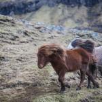 hokensas-naturreservat-horses-tidaholm-habo-mullsjo-hjo