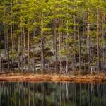 anhede-scandinavian-forest-photo-art-landscape-web