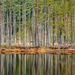 anhede-skandinavisk-fotokonst-offentlig-miljo-skog-web
