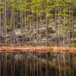 anhede-skandinavisk-fotokonst-skog-web