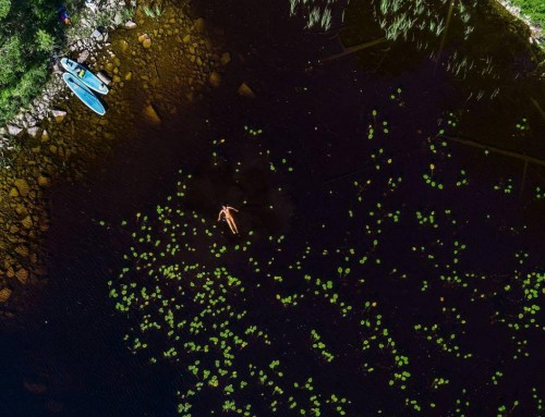 Swimming with water lilies – Tiveden, Sweden