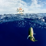 split-surface-underwater-photographer-jesper-anhede-mahi-mahi-pacific-ocean