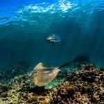 undervattensfotograf-jesper-anhede-rocka-seychellerna