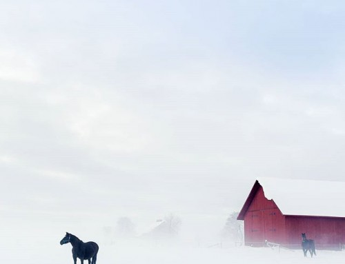 Horsey in winter wonderland. #horse #winter #wonderland #sweden #visitsweden