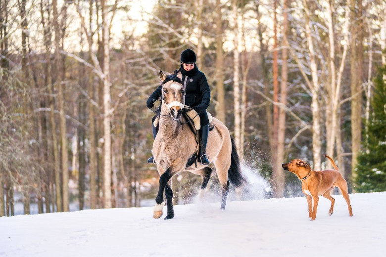 snow galloping swedish winter ösjonäs tiveden national park