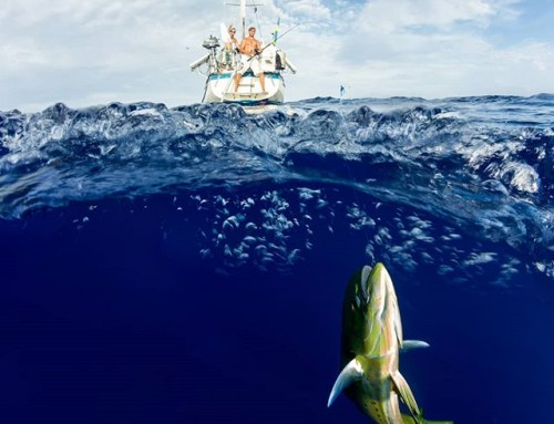 While sailing over the South Pacific Ocean the Mahi Mahi was our main food source. This is probably the most difficult photo situation I have experienced. #mahimahi #dorado #underwater #fishing #sailing