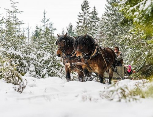 Riding the sled through Swedish winter. #horse #sled #forest #sweden #visitsweden