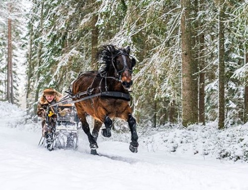 One horsepower top speed. #horse #sledge #winter #sweden #visitsweden