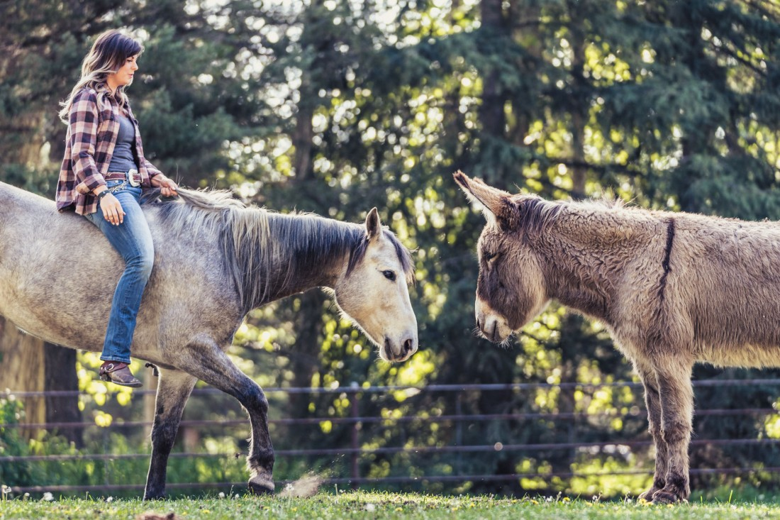 blind-horse-lea-cowgirl-louise-donkey-snickers-editorial-photography
