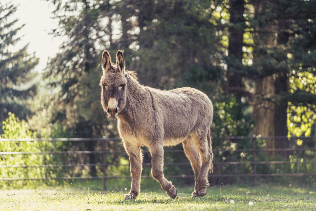 donkey-snickers-editorial-portrait