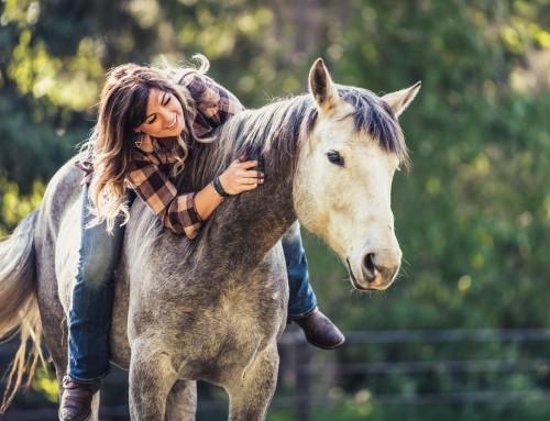 Redaktionellt porträttfoto – Lea, berättelsen om den blinda quarterhästen