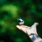 sweden-nature-outdoor-bird-feeding-hand-palm
