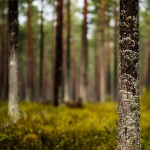 sweden-nature-outdoor-forest
