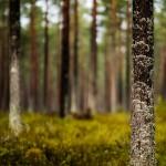 sweden-nature-outdoor-forest