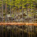 sweden-nature-outdoor-forest-lake-water-reflection-hokensas
