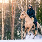 sweden-nature-outdoor-riding-horses-winter-snow