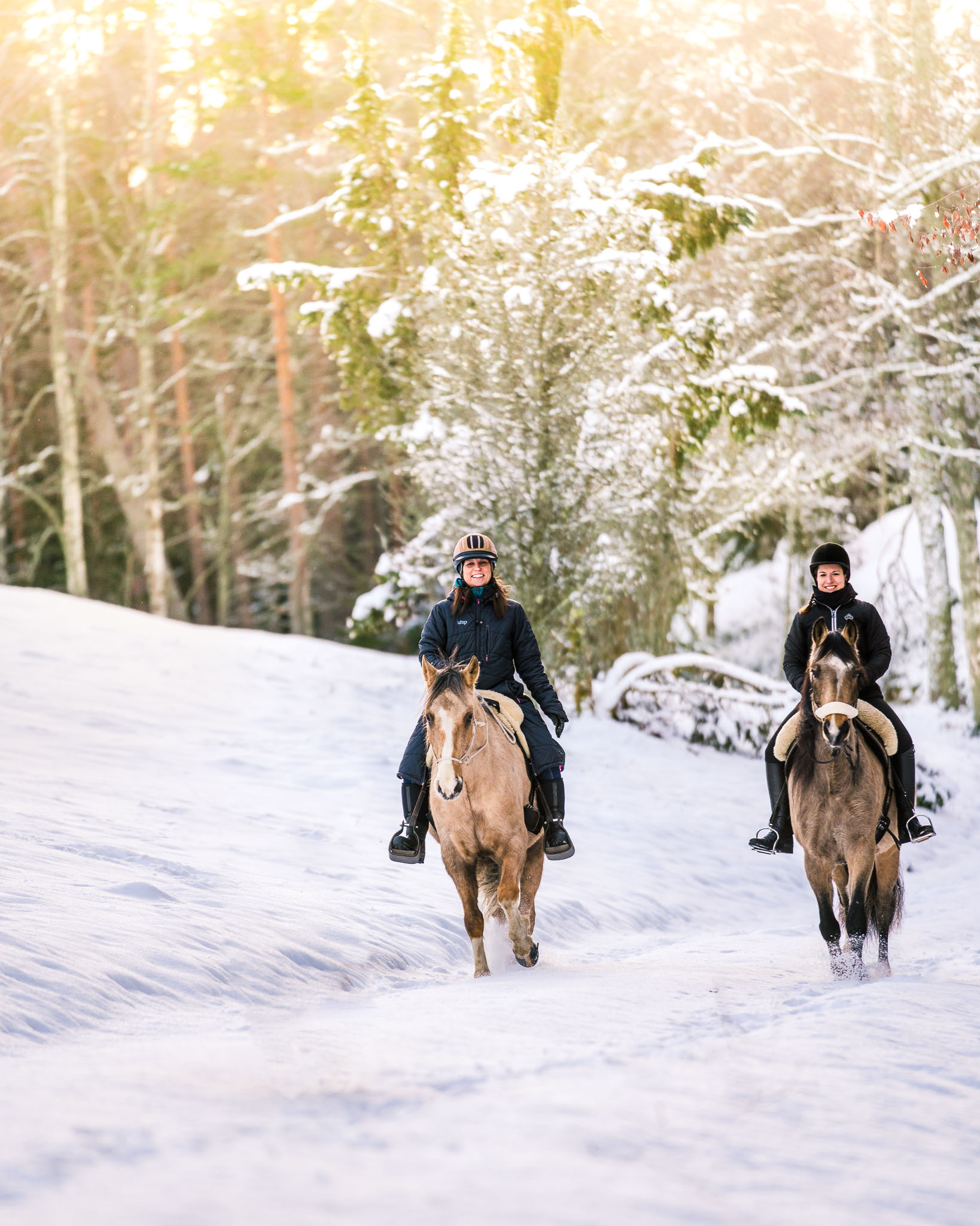 sweden-nature-outdoor-winter-riding-horses