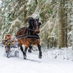 sweden-nature-outdoor-winter-sledge-horse