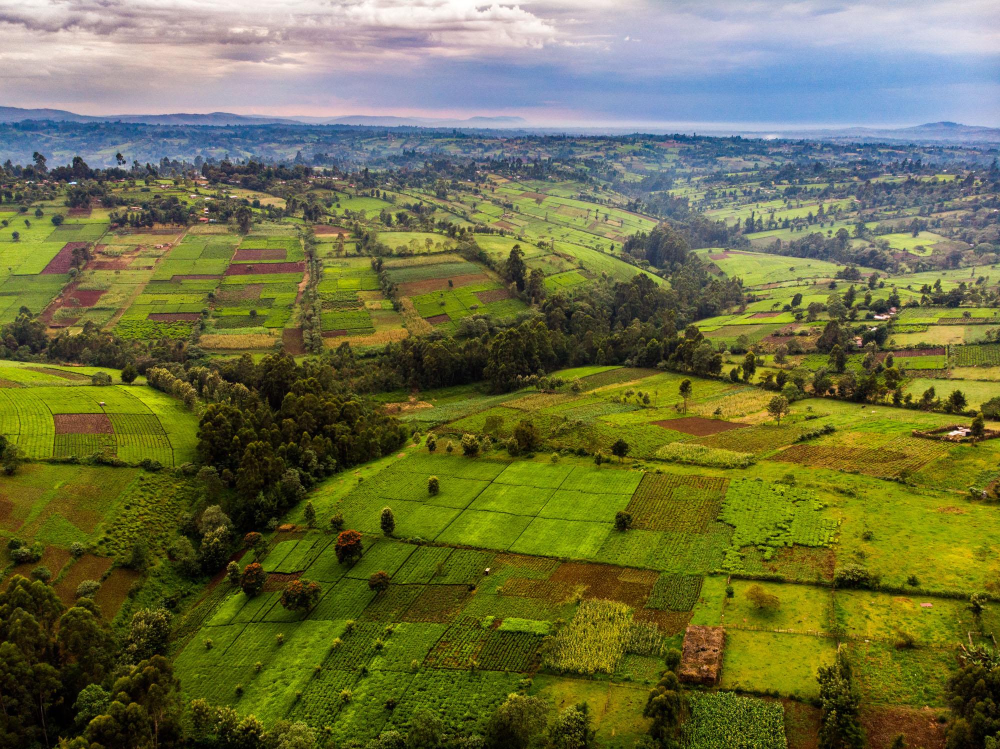 tea plantations kericho kenya africa aerial drone photographer