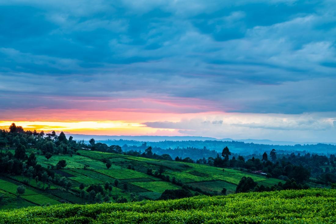 tea plantations kericho kenya africa sunset giz ukaid photographer