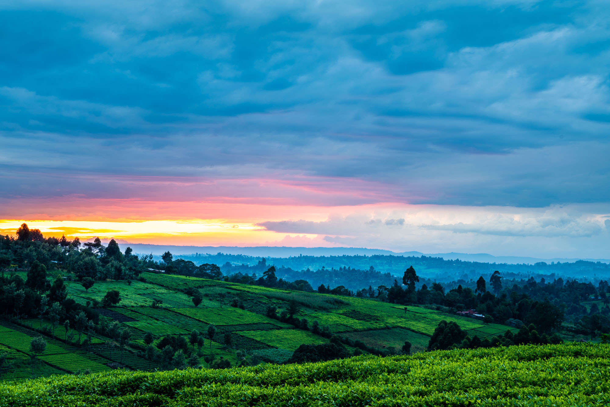 tea plantations kericho kenya africa sunset giz ukaid photographer