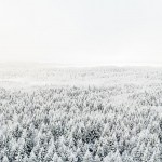 genre-image-industry-photographer-winter-forest-pulp-paper-sweden
