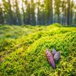 genre-image-kottar-mossa-industrifotograf-skog-massaindustri-pappersindustri-skogsindustri-sverige