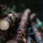 genrebild-avverkning-industrifotograf-skog-massaindustri-pappersindustri-skogsindustri-sverige