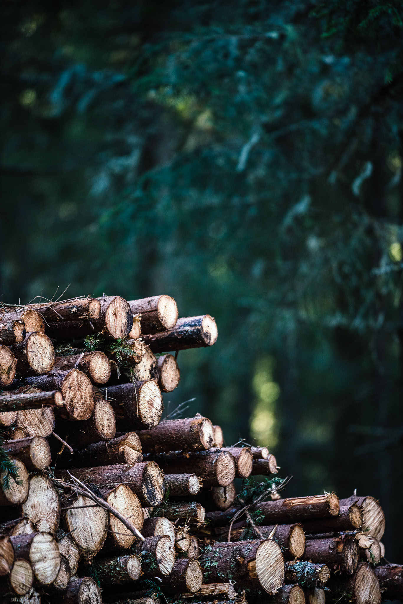 genrebildvirke-avverkning-industrifotograf-skog-massaindustri-pappersindustri-skogsindustri-sverige