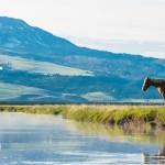 horse-centennial-valley-montana-usa-landscape-photographer-jesper-anhede-01076-sony-rx10