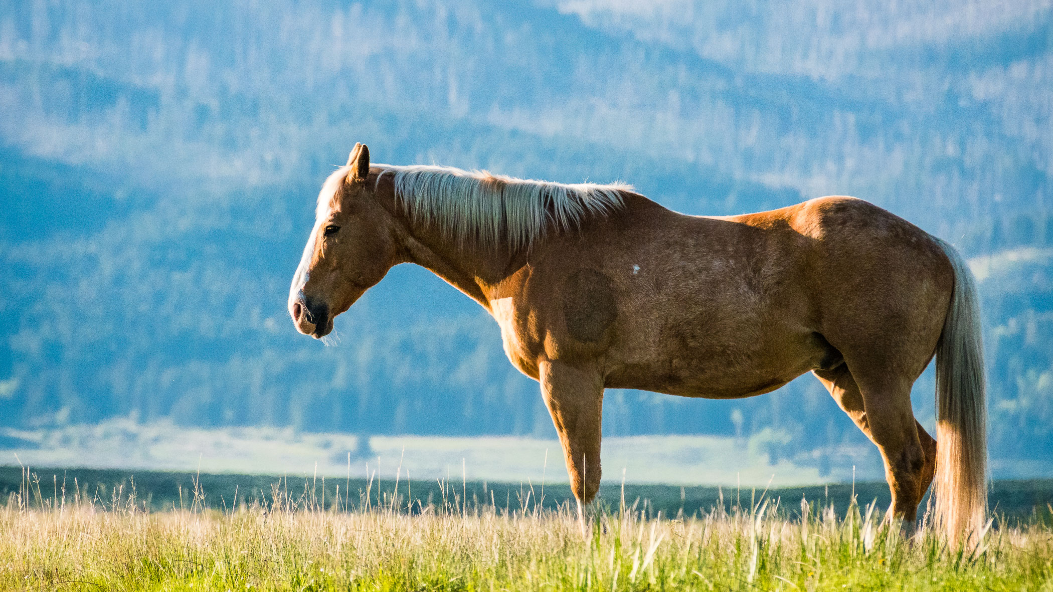 horse-centennial-valley-montana-usa-landscape-photographer-jesper-anhede-01077-sony-rx10